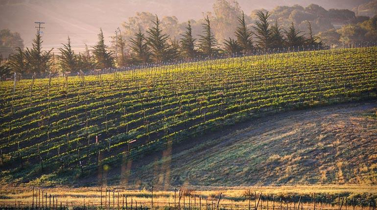 Kessler-Haak Vineyard used for La Voix Winery's Satisfaction Pinot Noir